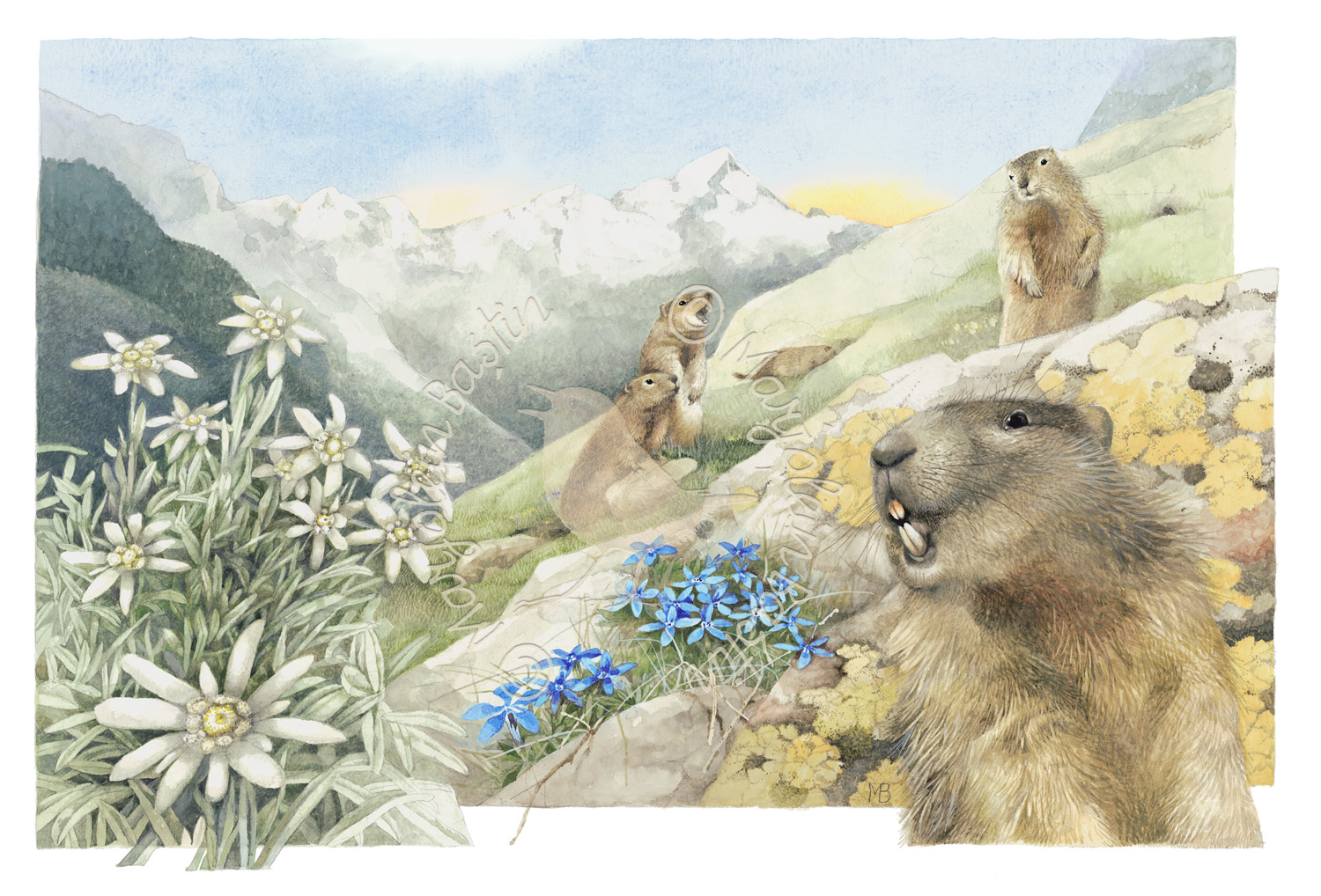 Call of the Alpine Marmot