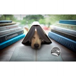 Dog Back to School by Ron Schmidt