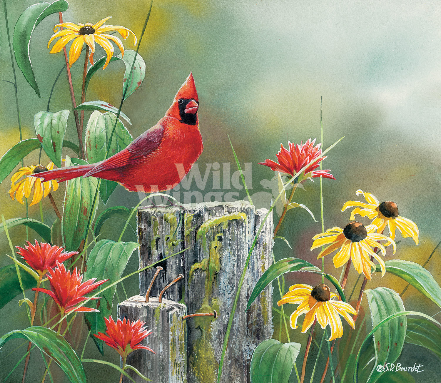 BOU26378_GreetingNewDayCardinal_WM