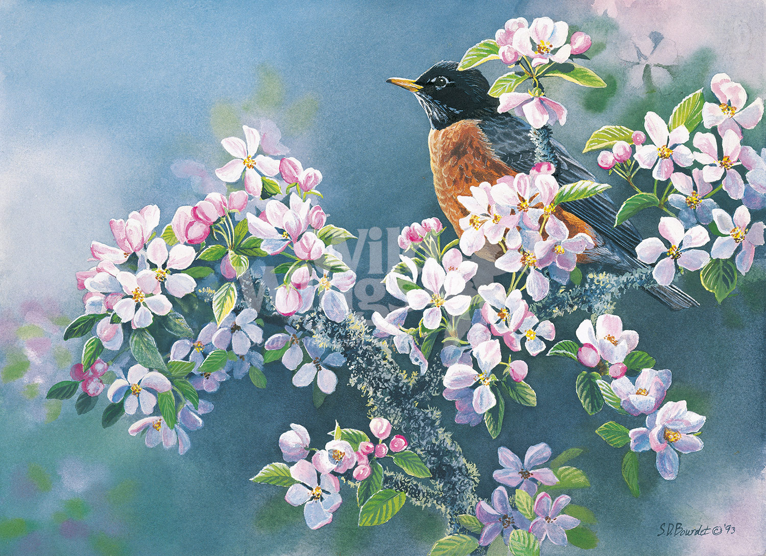 BOU28069_RobinAppleBlossoms_WM