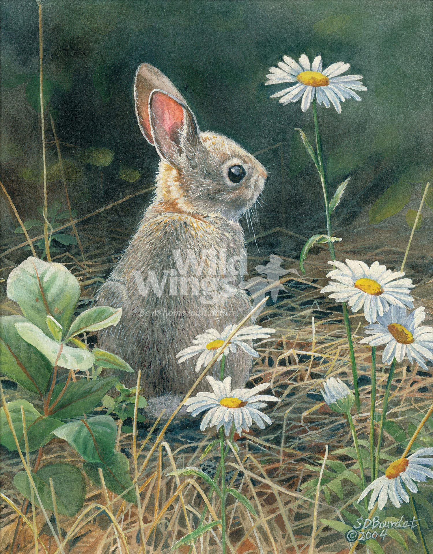 BOU74213_YoungCottontail_WM