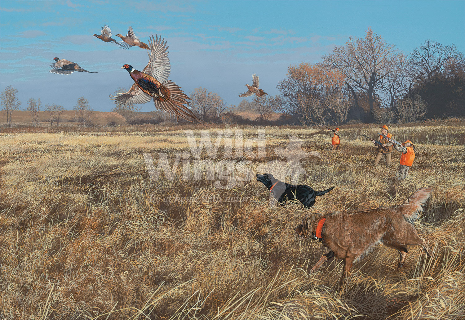 STOS87120_FirstHuntPheasants_WM
