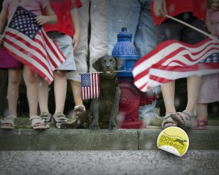 Black Lab Sam – 4th of July by Ron Schmidt